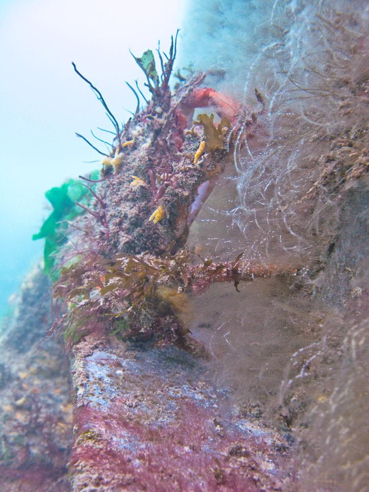 AnatolJust-Underwater Wessex-11