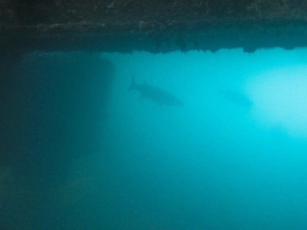 AnatolJust-Underwater Wessex-13