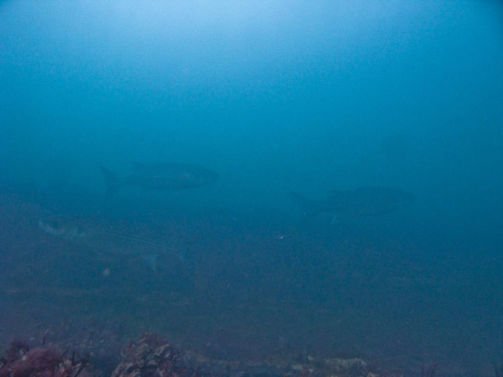 AnatolJust-Underwater Wessex-15