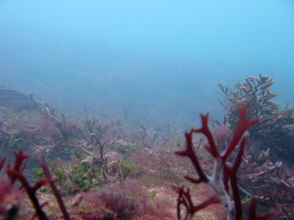AnatolJust-Underwater Wessex-16