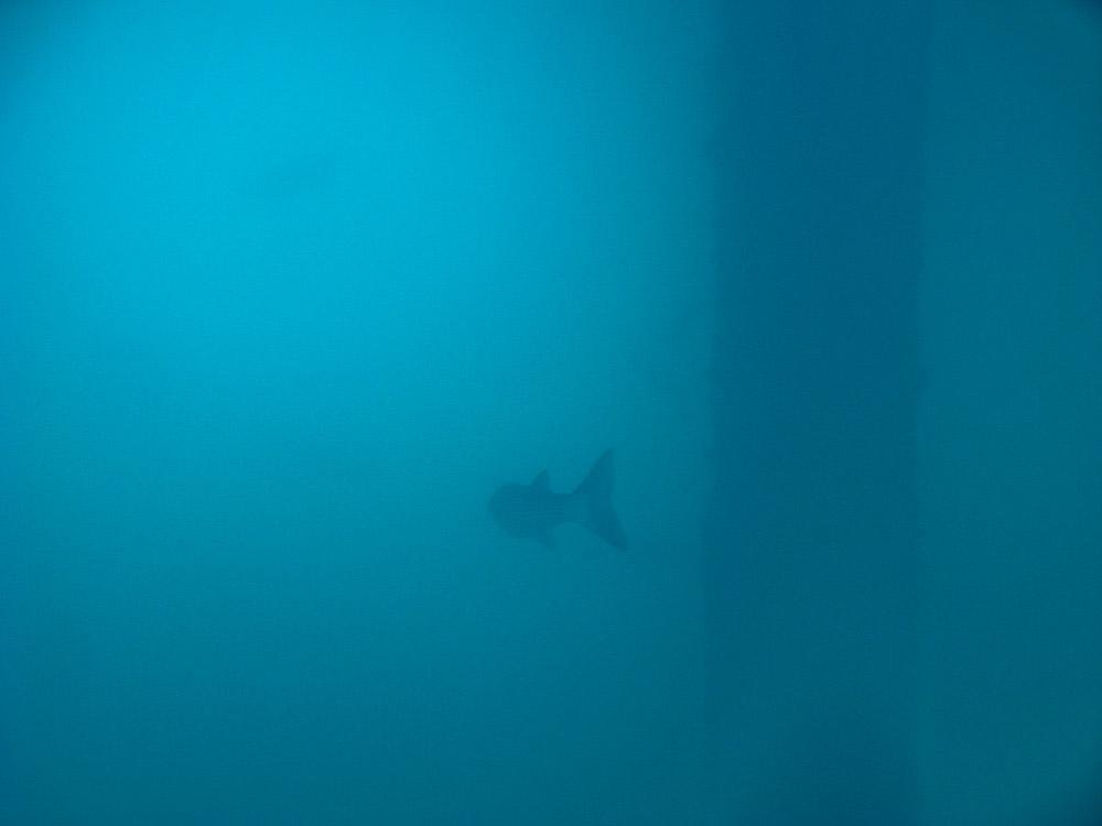 AnatolJust-Underwater Wessex-19