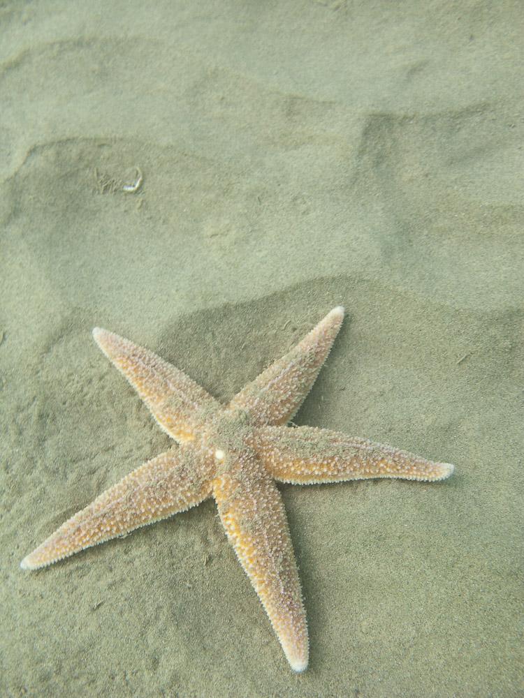 AnatolJust-Underwater Wessex-24