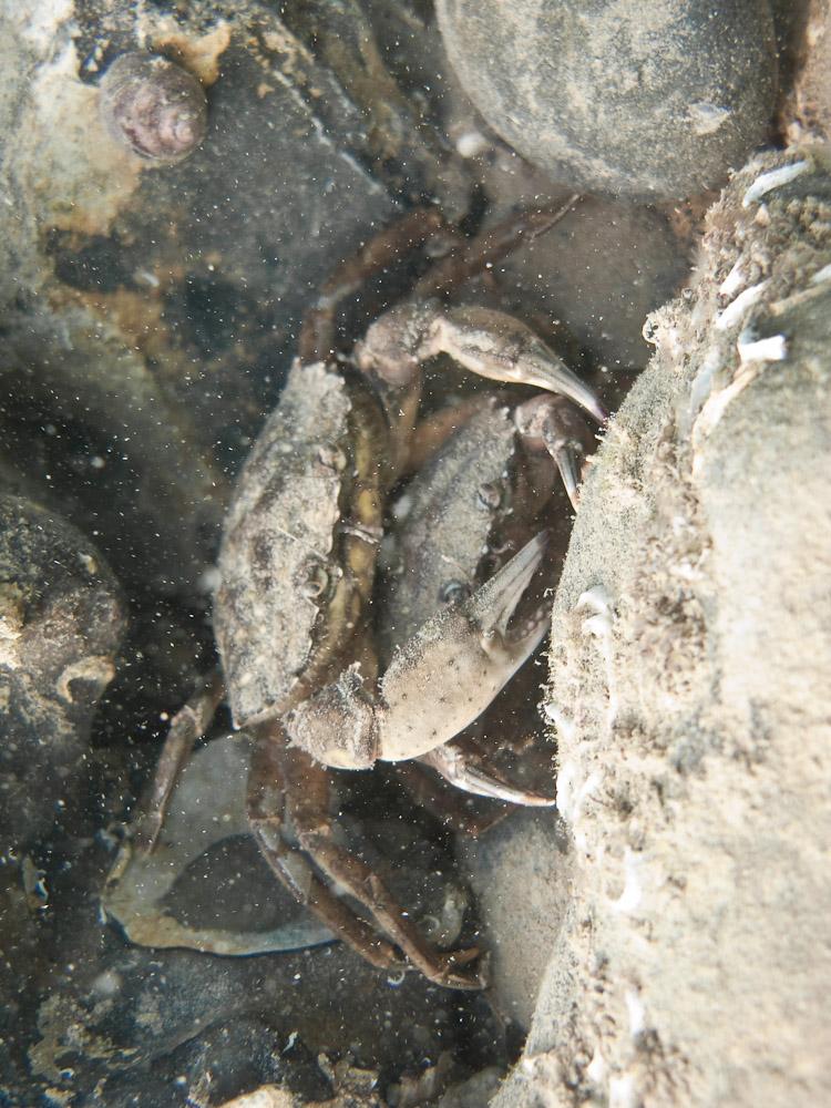 AnatolJust-Underwater Wessex-45