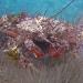 AnatolJust-Underwater Wessex-10