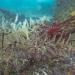 AnatolJust-Underwater Wessex-2