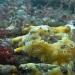 AnatolJust-Underwater Wessex-3