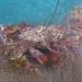 AnatolJust-Underwater Wessex-9