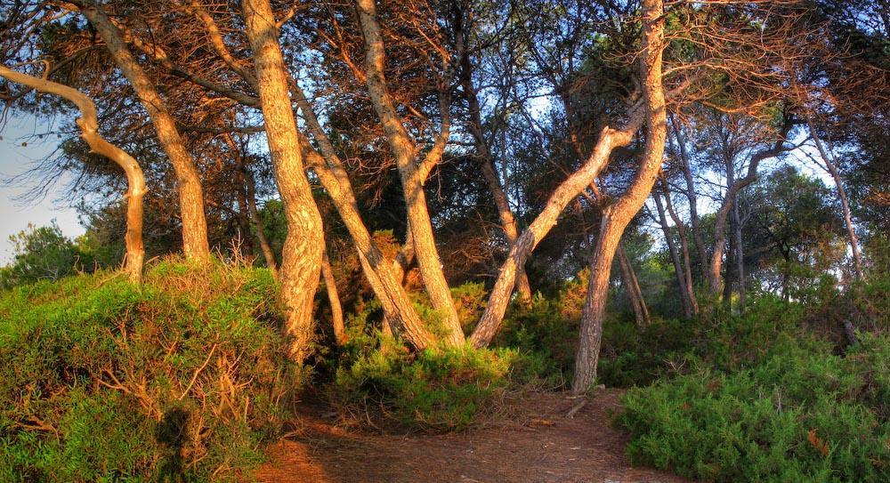 Tarragona-July-1.jpg
