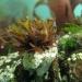 Cornwall underwater-AnatolJust-17