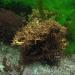 Cornwall underwater-AnatolJust-19