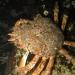 Cornwall underwater-AnatolJust-22