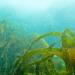 Cornwall underwater-AnatolJust-3