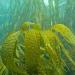 Cornwall underwater-AnatolJust-4