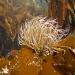 Cornwall underwater-AnatolJust-40