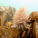 Cornwall underwater-AnatolJust-48