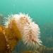 Cornwall underwater-AnatolJust-51