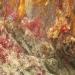 Cornwall underwater-AnatolJust-56
